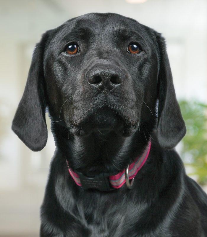 Piper The Dog